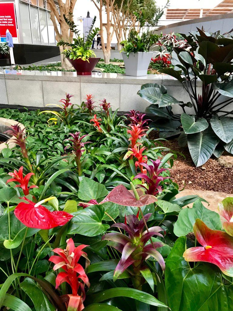 atrium with red bromeliads