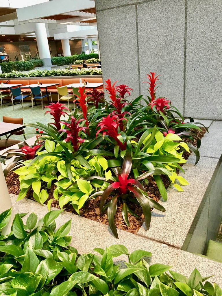 red bromeliads and green pothos