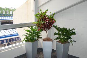 Plant Rentals in Pots