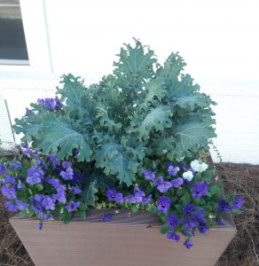 winter flower planter