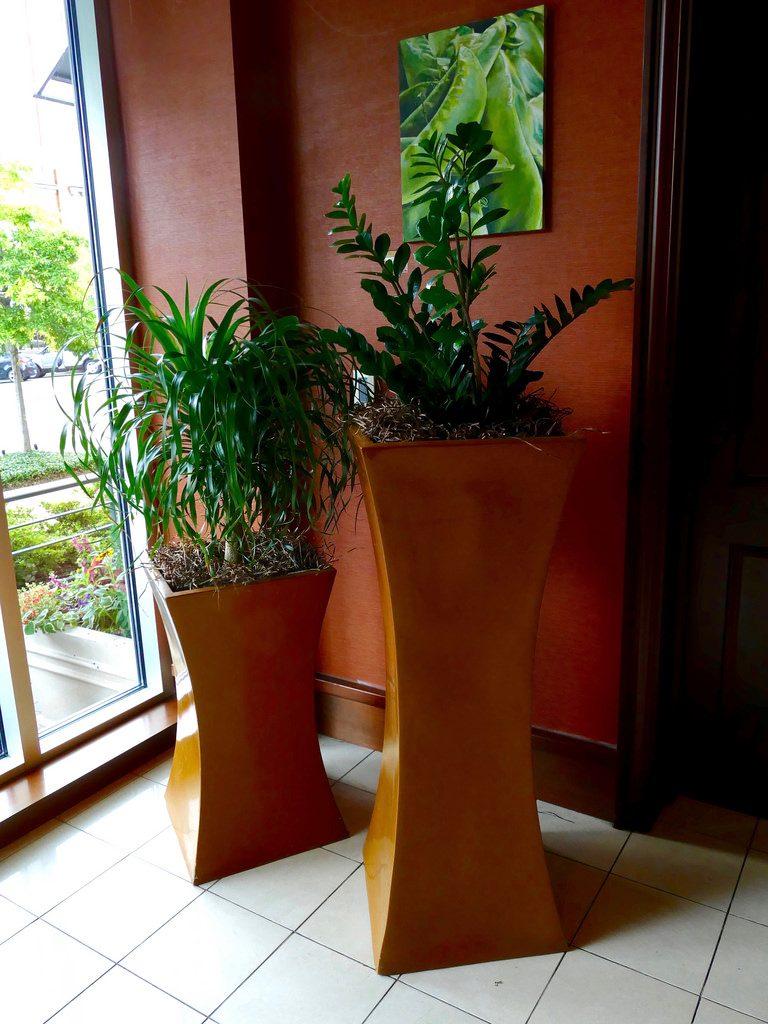 zz plants in blue planters