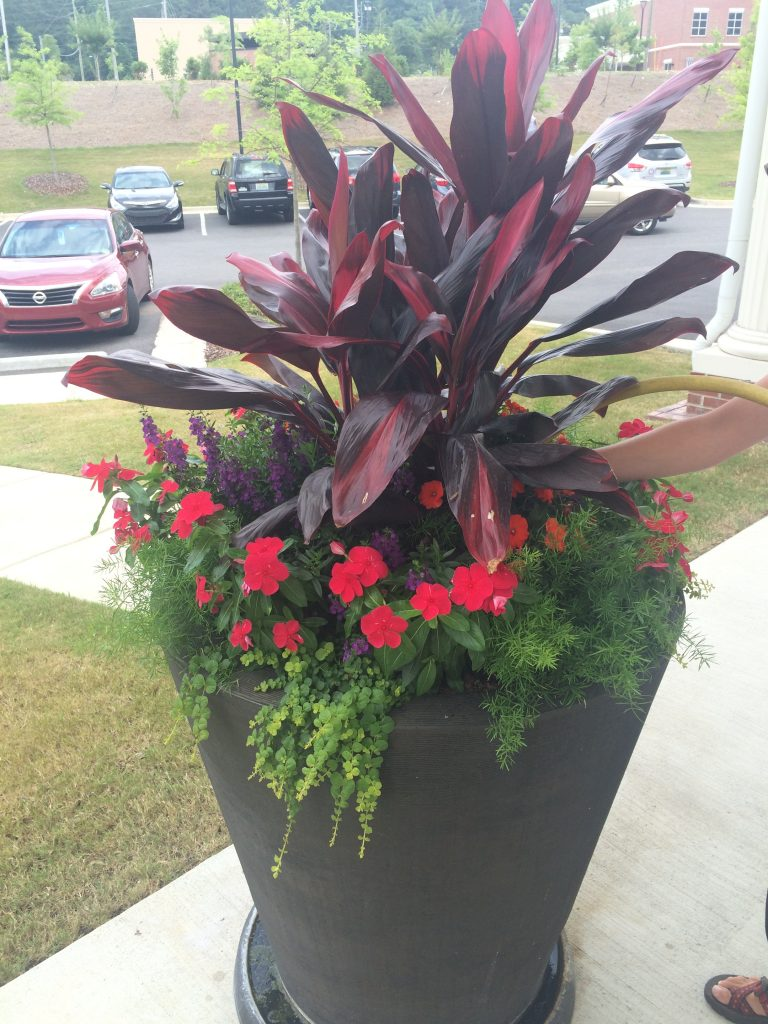 Exterior pot with cordyline