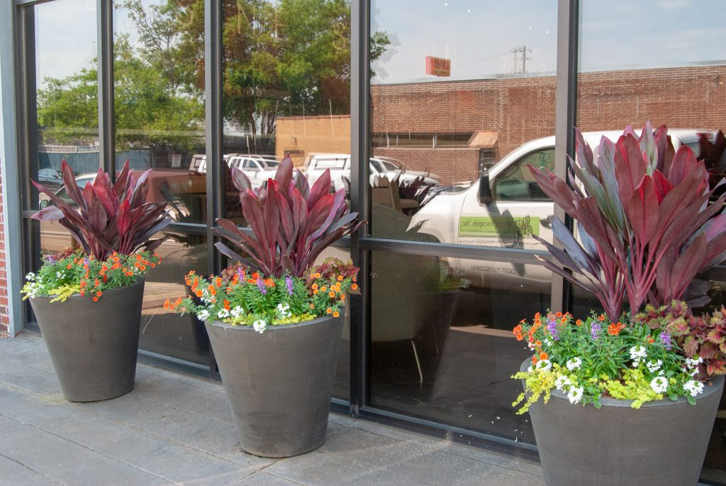 Exterior landscaping with cordyline