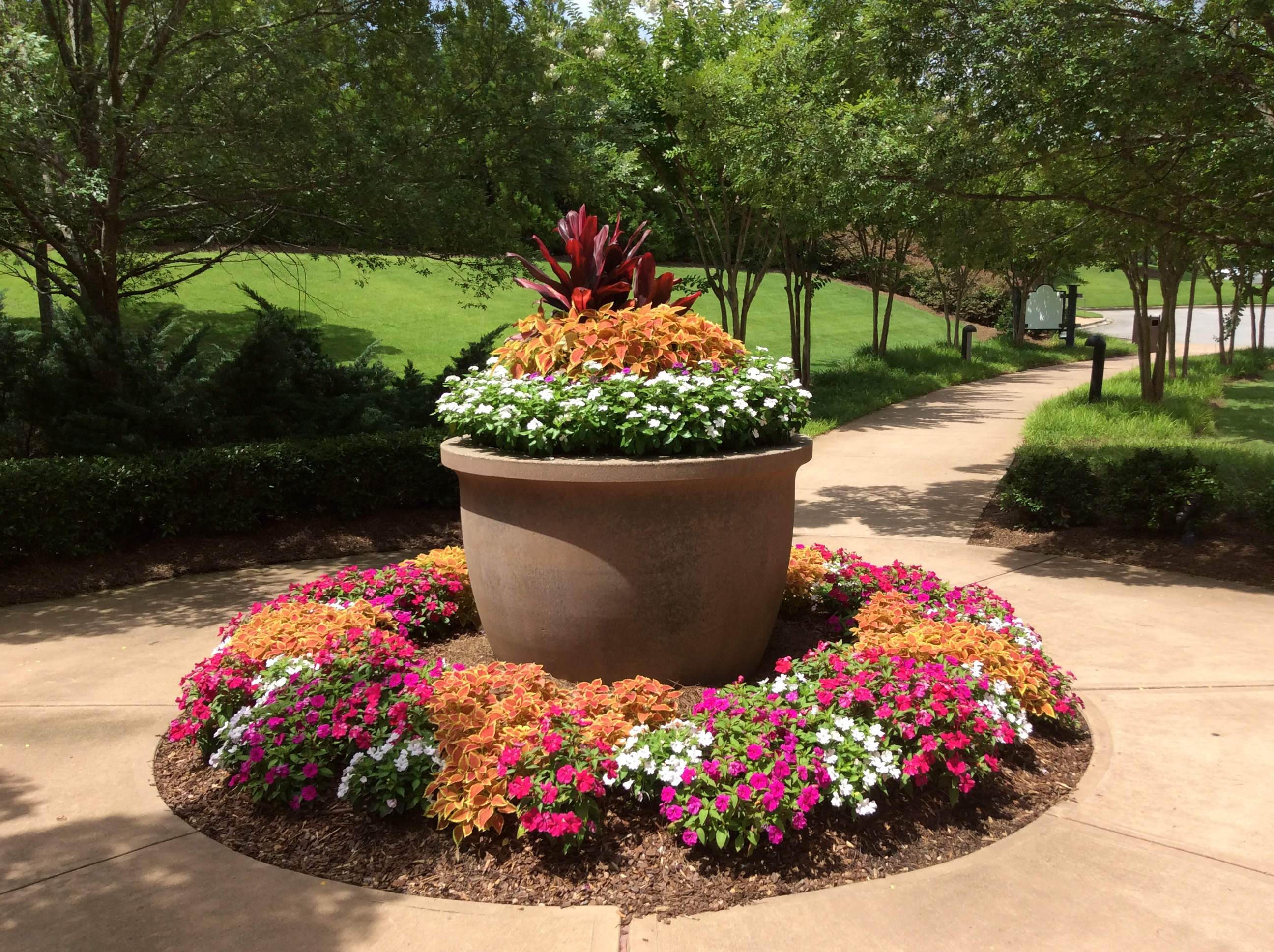 Exterior pot and flowerbed with cordyline