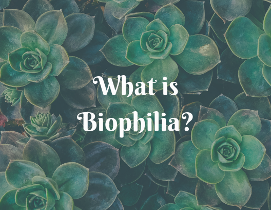 What is Biophilia